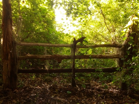 Moss covered gate
